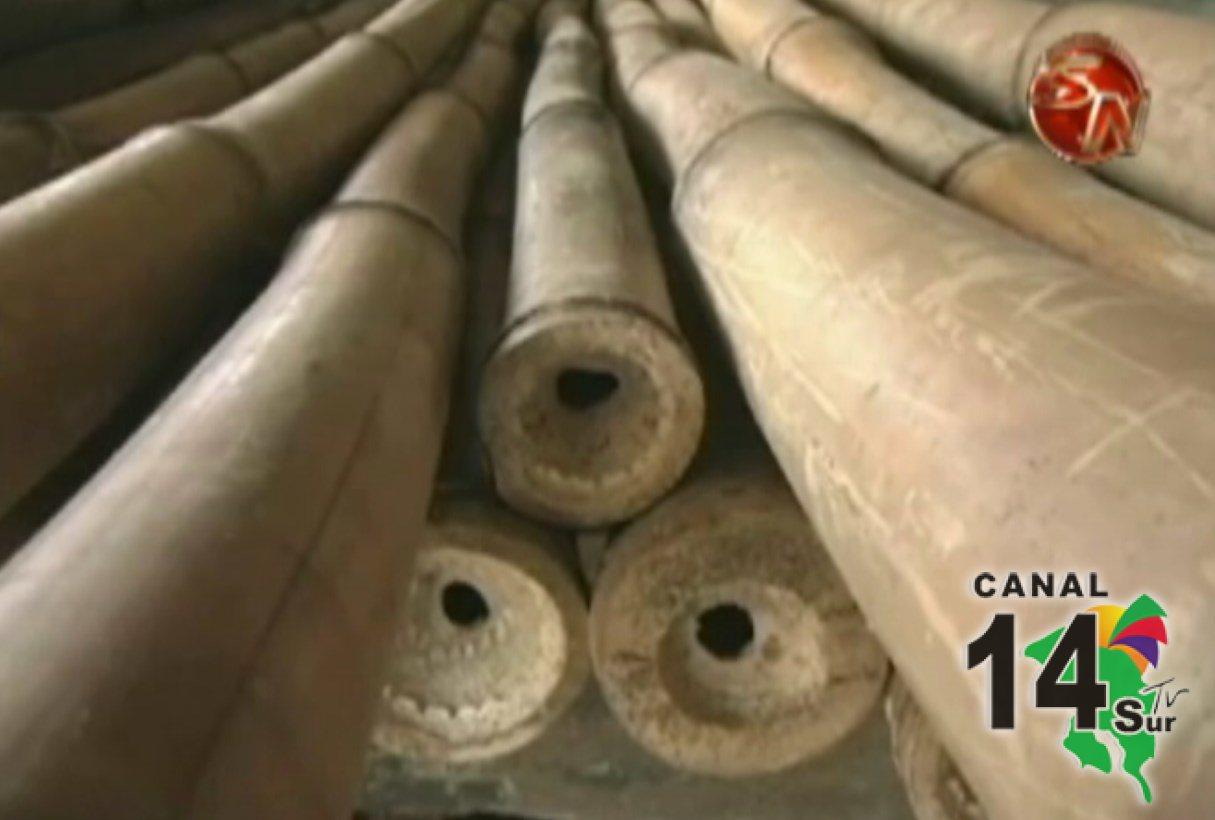Brindan curso de producci n y procesamiento de bamb en - Reproduccion del bambu ...